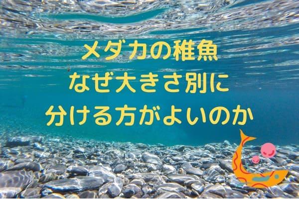 medakatigyowakeru