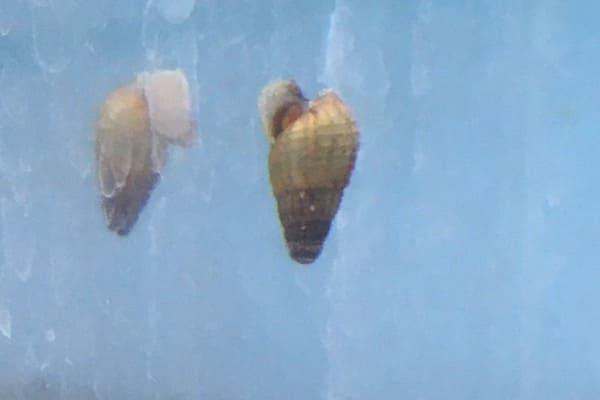 snailbig